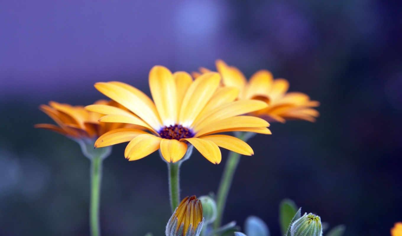 цветы, макро, красавица, качество, разных, разрешениях, желтые, хороший, хорошего,