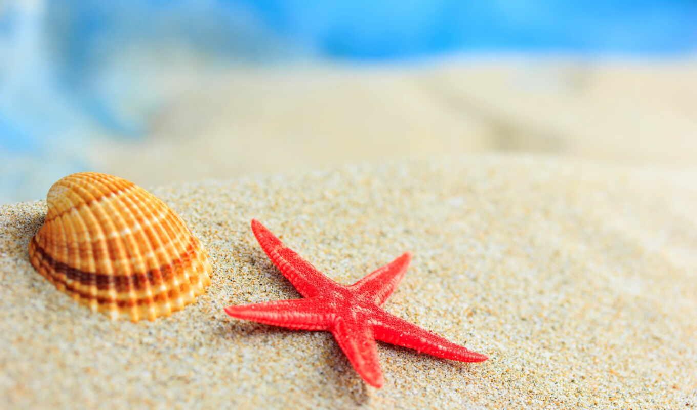 marine, star, песок, seashell, море, магнит, red, пляж