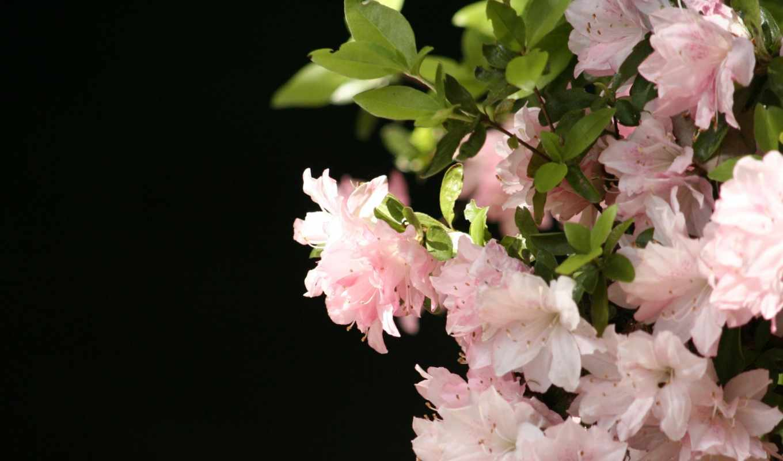 цветы, растения, красиво, wallpaper, flowers, картинка, wallpapers, wall, pink, desktop, hq,