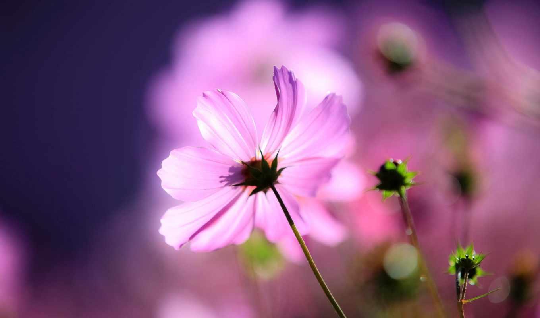 макро, цветок,