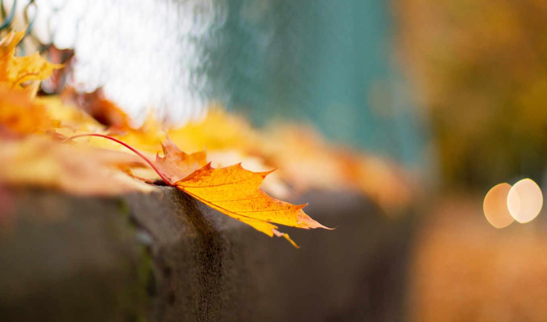 осень, макро, боке, лист, листья, забор, сетка,