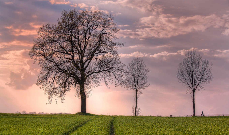 открыть, поле, дерево, весна, широкоформатные, desktop, небо,
