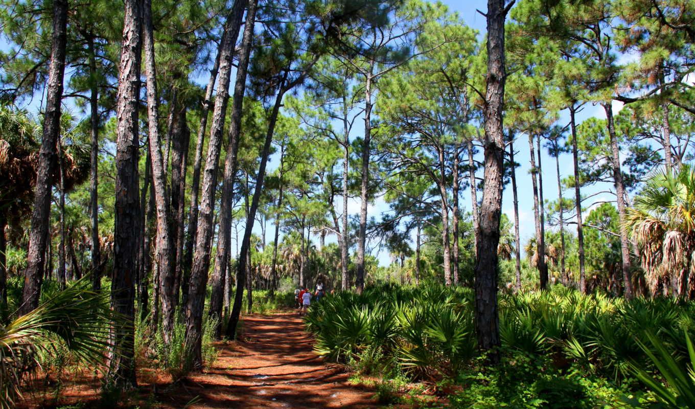 лес, equatorial, priroda, парки, kartinka,