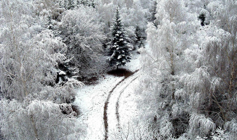 лес, снег, свой, winter, деревя, совершенно, дорога,