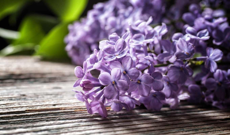 цветы, сиреневый, коллекция, красивые,
