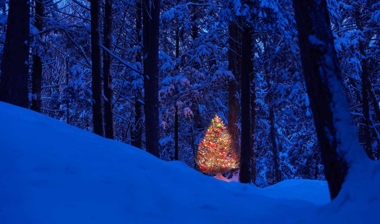 new, год, winter, christmas, праздник, дерево,