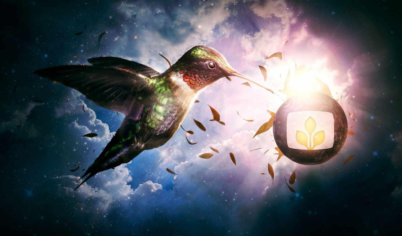 desktopography, птица, фоны, эмблема, февр,