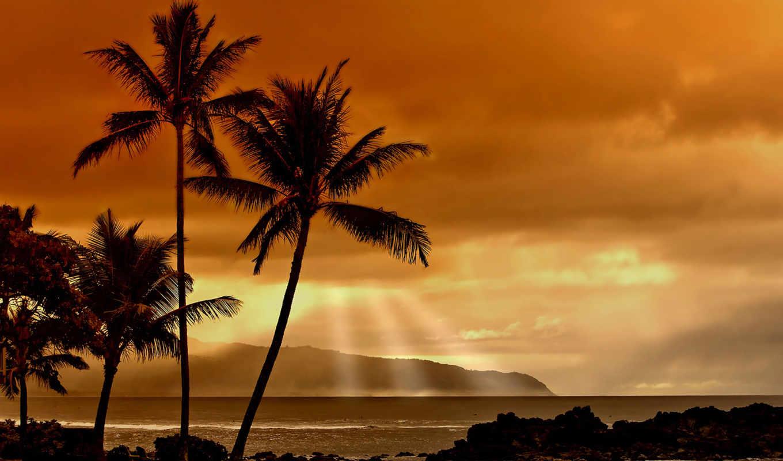 закат, пальмы, море, природа, пляж, закате, тропиках,