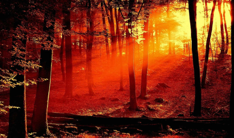 природа, лес, red, закат,