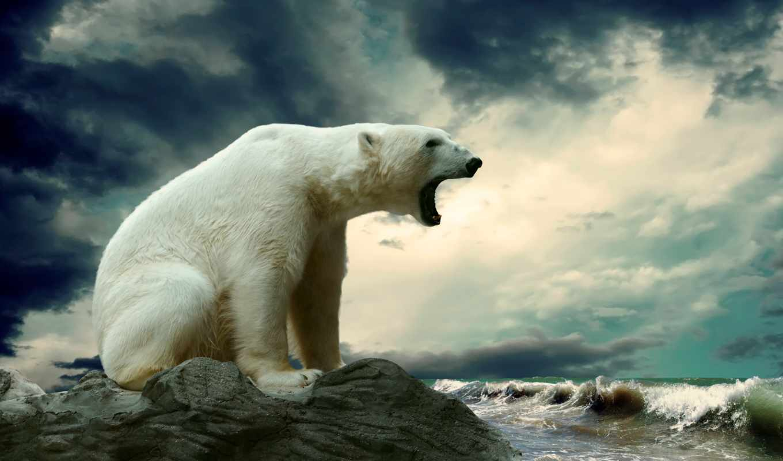 антарктиде, невероятных, по, фактов, года, знают, которые, медведь, pinterest, white,