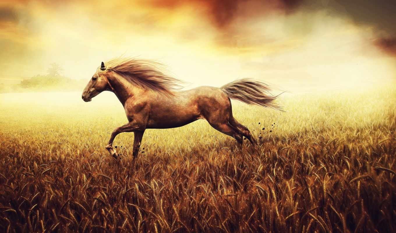 поле, лошадь, лошади, animal, world, грациозная, золотом, страница, windows,
