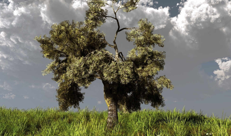 дерево, холм, трава, природа, арт, обои, тучи, klo