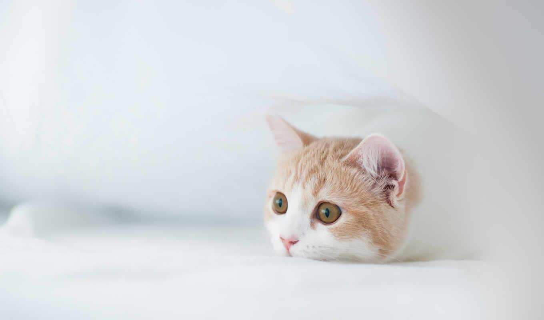 котенок, white, torode, бен, кот, hannah, фотограф, разных,