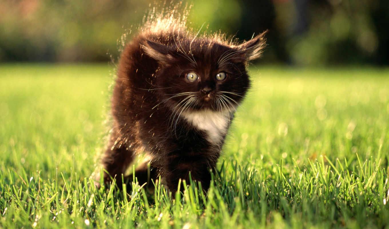 обои, кот, кошки, красивые, котенок, собаки, фото,
