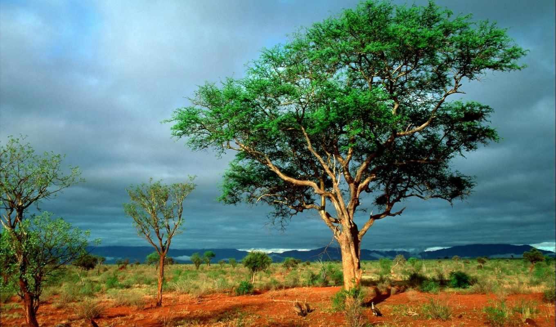 nature, без, free, desktop, earth, фотография, initiative, towards, названия, зелень, african, степи, жаркой, an, tree, trees, grachik,