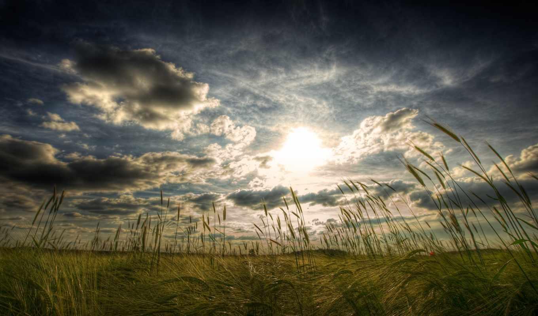 природа, поле, большие, качественные, широкоформатные, пейзажи -, wide,