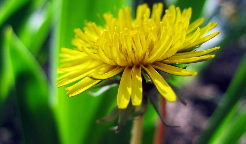 цветами, фотографии, яркие,