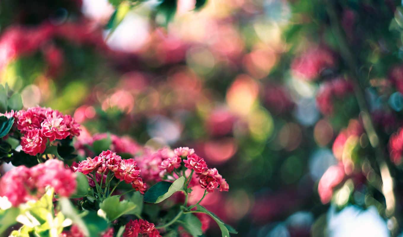 цветы, розовые, столы, мар,