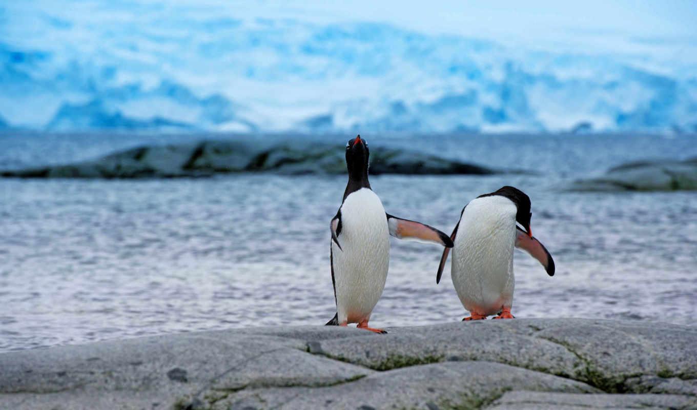 пингвины, берег, антарктида, пара, ледник, снег, просмотреть,
