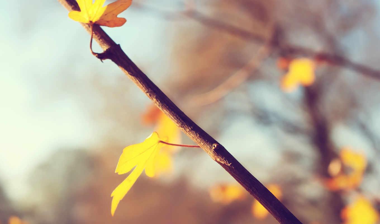 природа, art, листья, макро, depth,