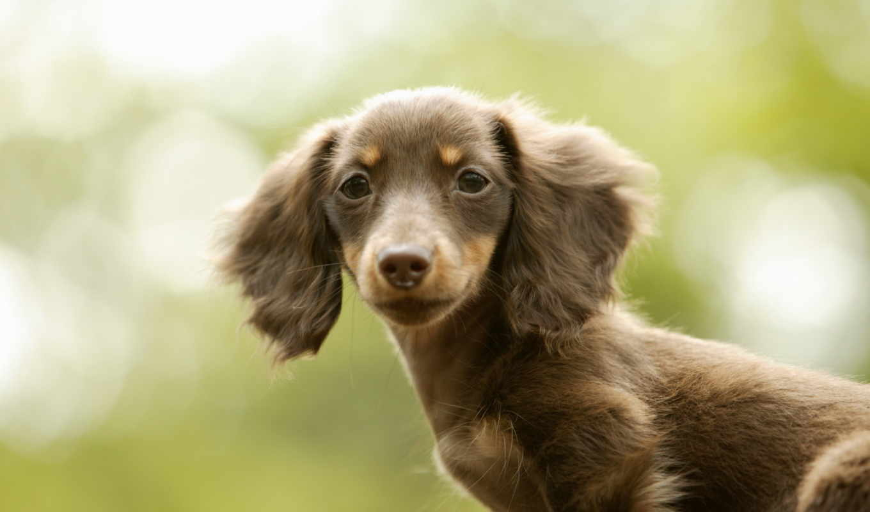 собачки, собачек, кошечек, новогодние, pr, живности, собака,