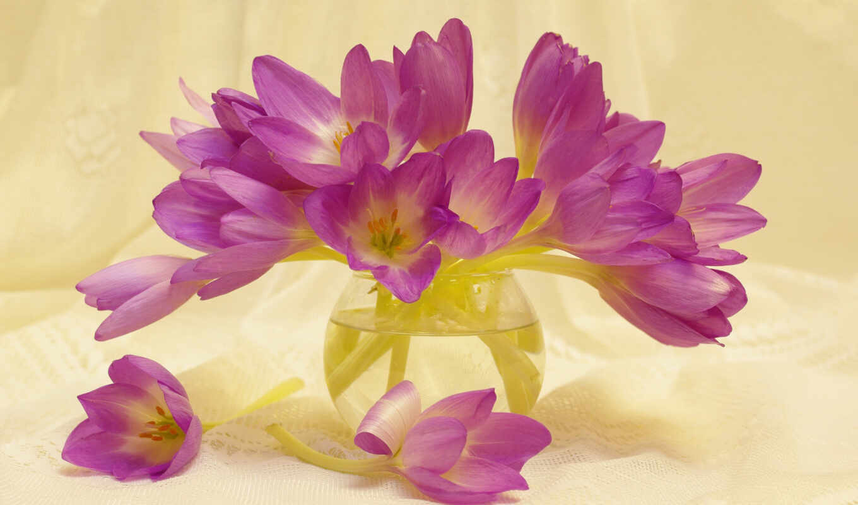 цветы, крокус, природа, glass, розовый, осень, ваза, растение