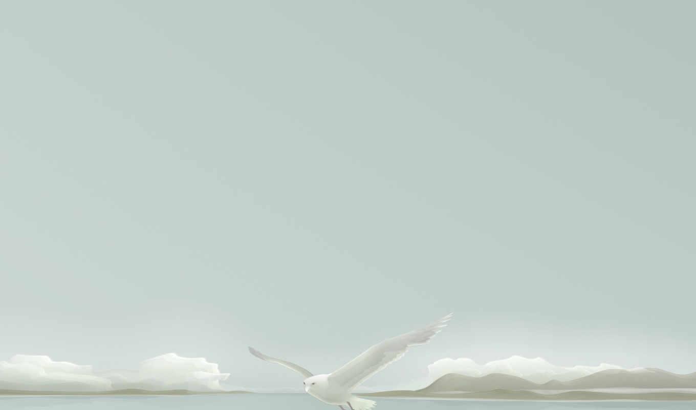 вектор, чайка, минимализм, seagull, смотрите, masaüstü, nature, resimleri,