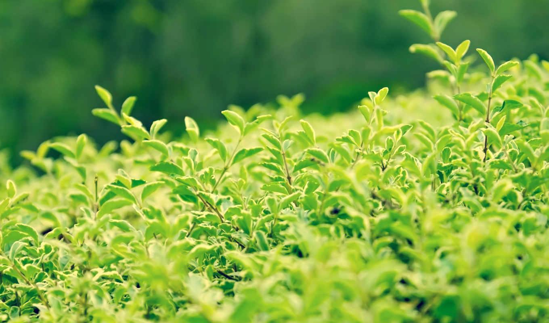 зелёный, категория, темы, разные, подборка, summer, часть, красивые, ог,