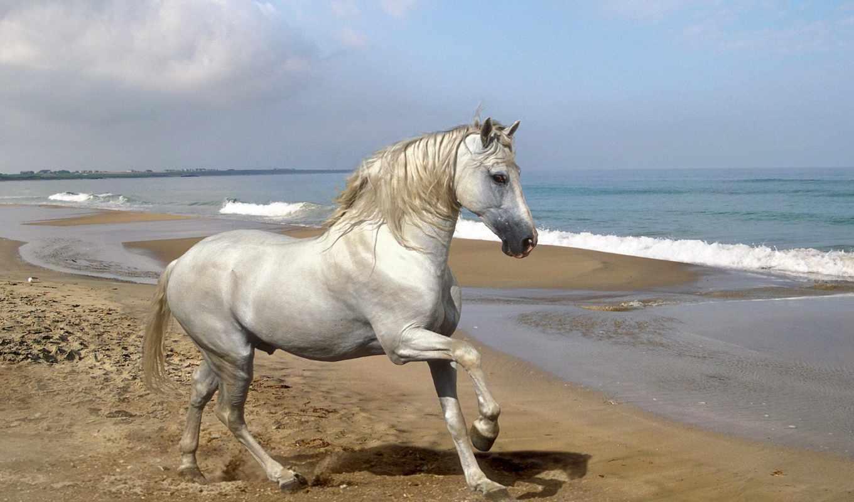 лошадь, белая, от, клуб, просмотр,