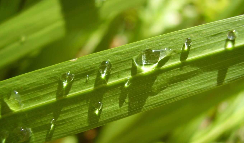 категория, совершенно, природа, нояб, зелёный, капли, лист,