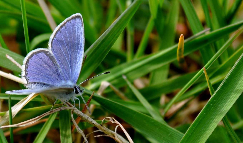 ecran, природа, papillon, fonds, animaux,
