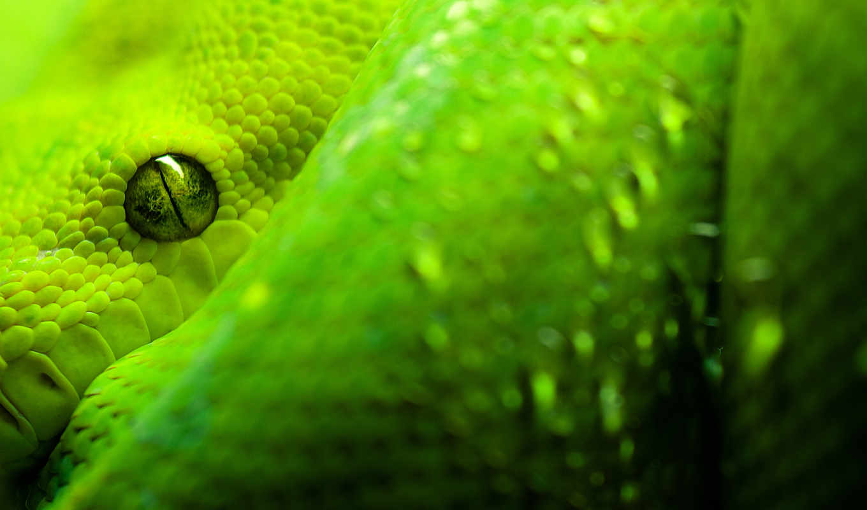 snake, зелёный, free, snakes, viper, desktop, share,