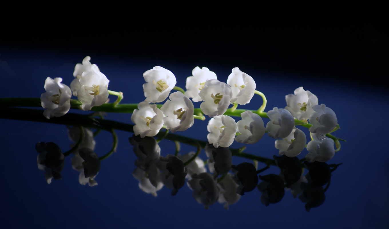 цветы, красивые, весна,