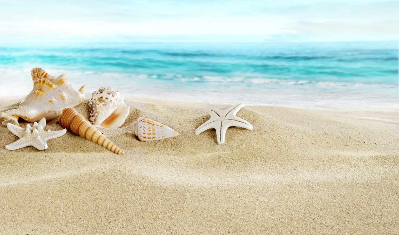 море, пляж, seashells, песок, ракушки, коллекция,