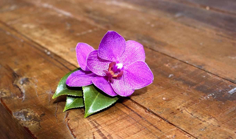 орхидея, цветы, листики, розовый, доски,