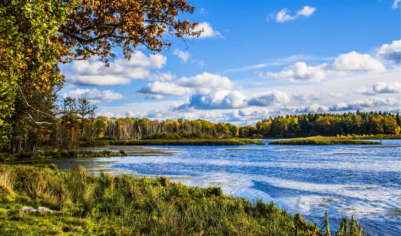 priroda, природа, reka, деревя, мб, les, июня,