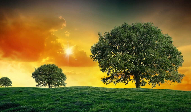 солнца, дневник, красивые, коллекция, summer,