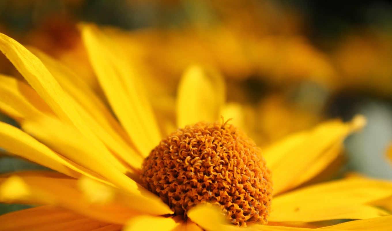 цветок, желтый, размытость, лепестки, картинка, вертикали, имеет, горизонтали,