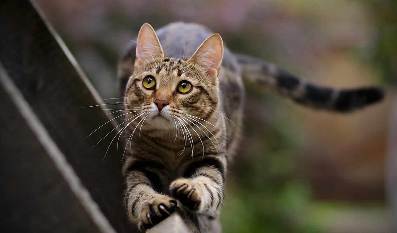 кот, кошки, коты, животные, просмотреть, потягиваться,
