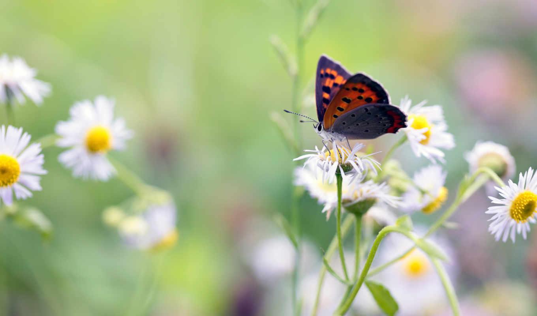 бабочка, цветы, графика, розмытость,