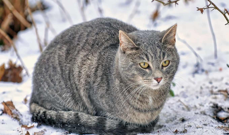 кот, снег, дек, winter,