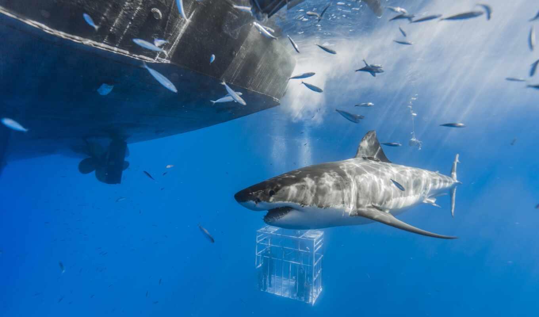 акула, fish, animal, кровать, море, cover, white, duvet, underwater, ocean