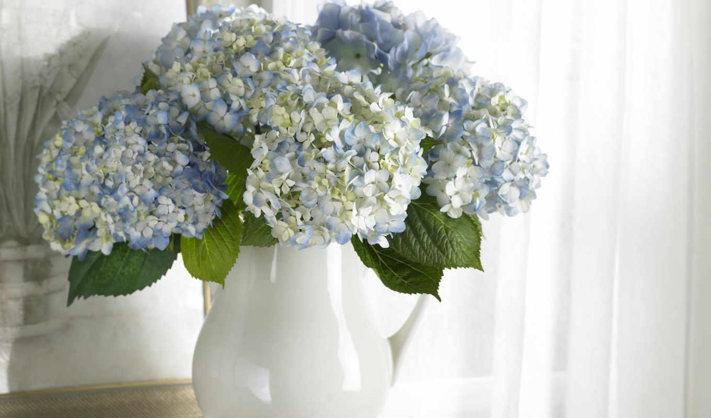 цветы, картина, букет, чистота, белые, ваза, голубые, hydrangea, wallpaper,