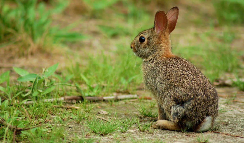 bunnies, images, desktop, best, widescreen,