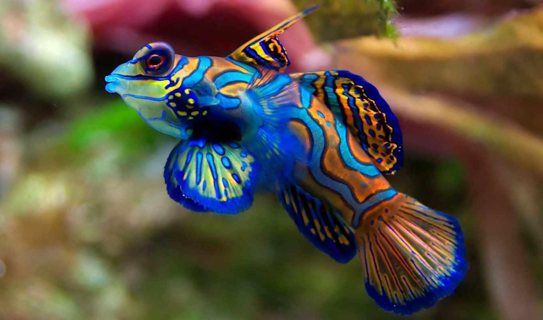 следы, интересные, рыбах,