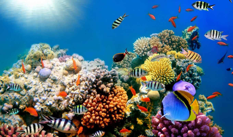 world, underwater, фотообои, изображений,