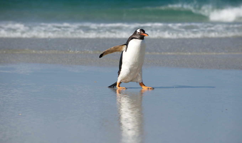 пингвин, zhivotnye, tux, пингвины, linux, косой, пульт, знамя, заказать, морские,