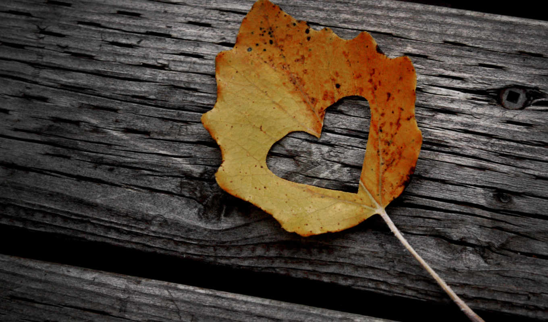 сердце, лист, сердце, дерево, осень