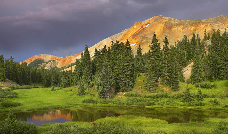 лес, ели, деревья, горы, природа, картинка,