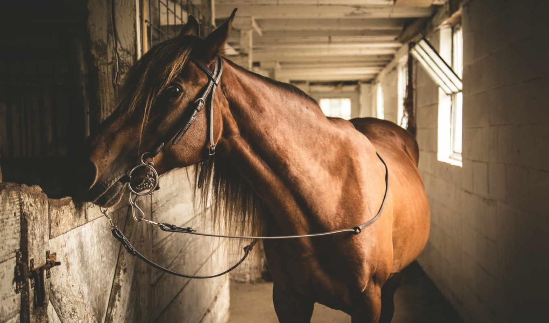 лошади, животные, página, parede, para, desktop, поля, foto,